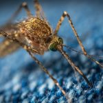 West Nile Virus has a third human case Reported this Year