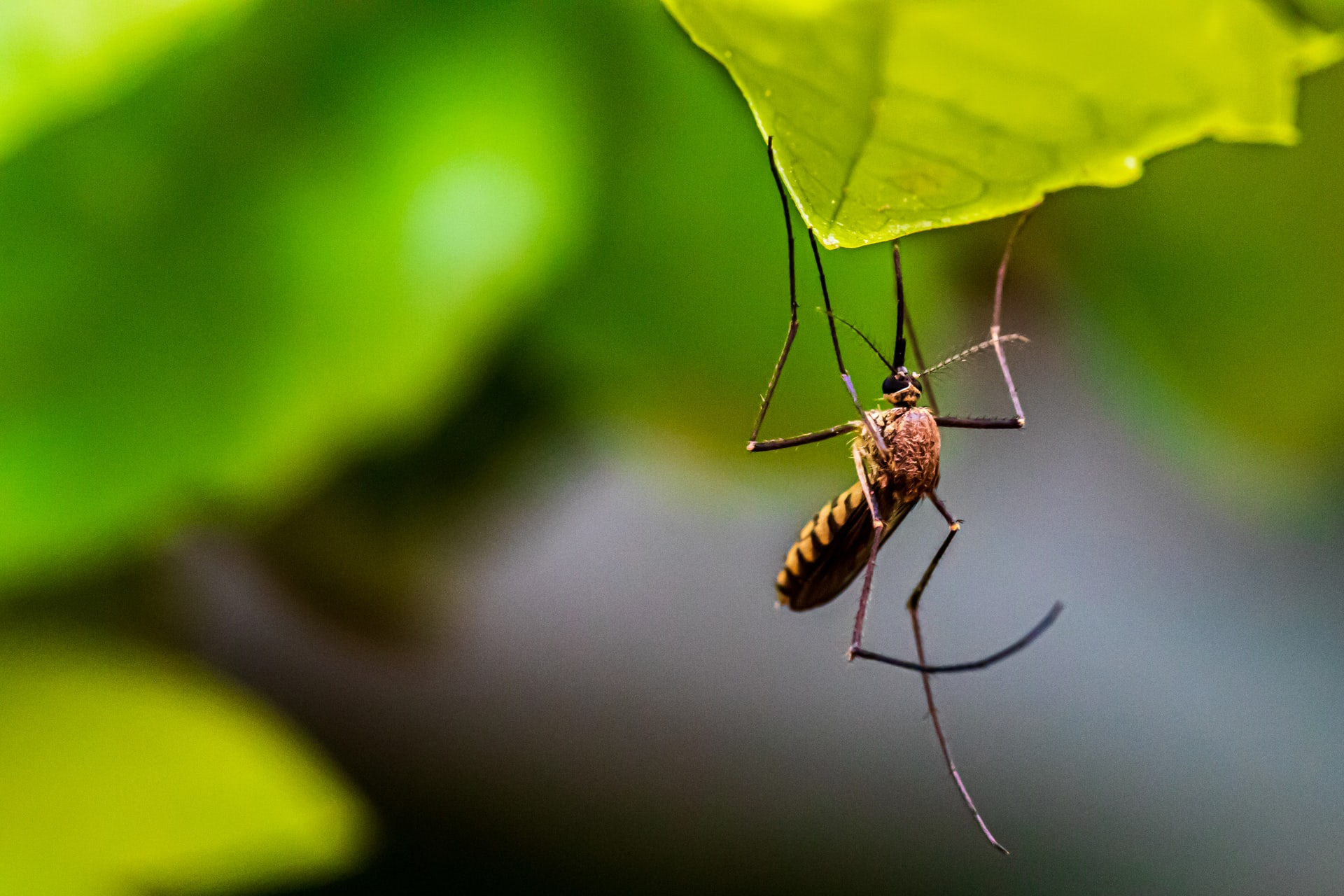 Mosquito Numbers Expected to Rise, First West Nile Virus Infection